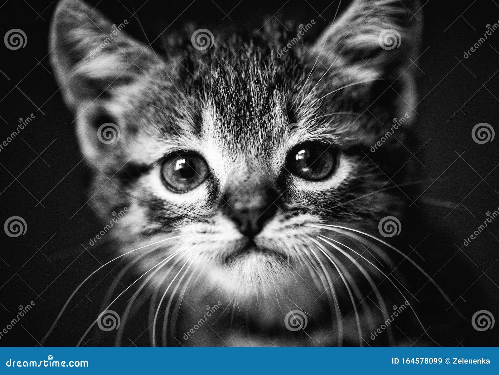 Cute Little Kitten With Amazing Eyes Sweet Baby Lovely Friend Animal World Stock Image Image Of Kitten Eyes 164578099