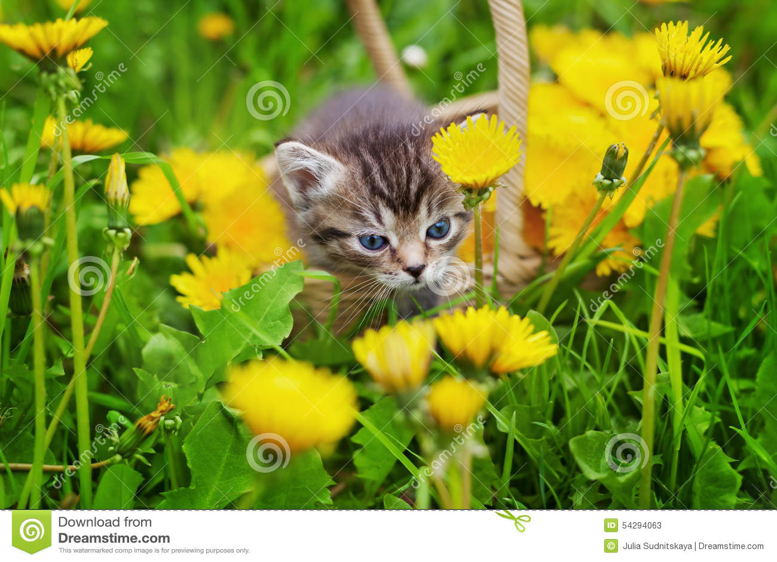 Cute Little Kitten Sitting In A Basket On The Beautiful Flower