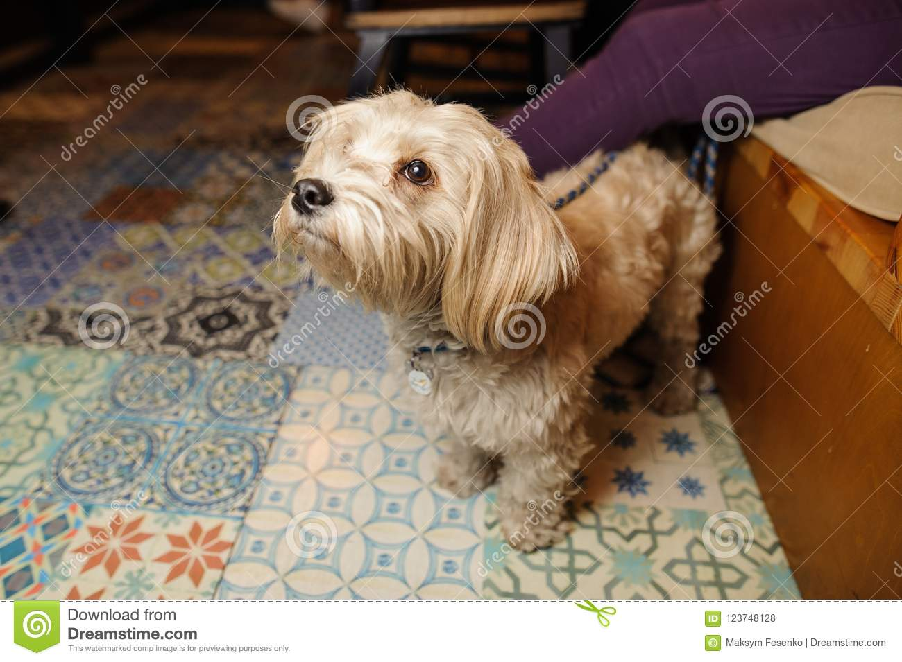 Cute little light brown dog sitting near his owner