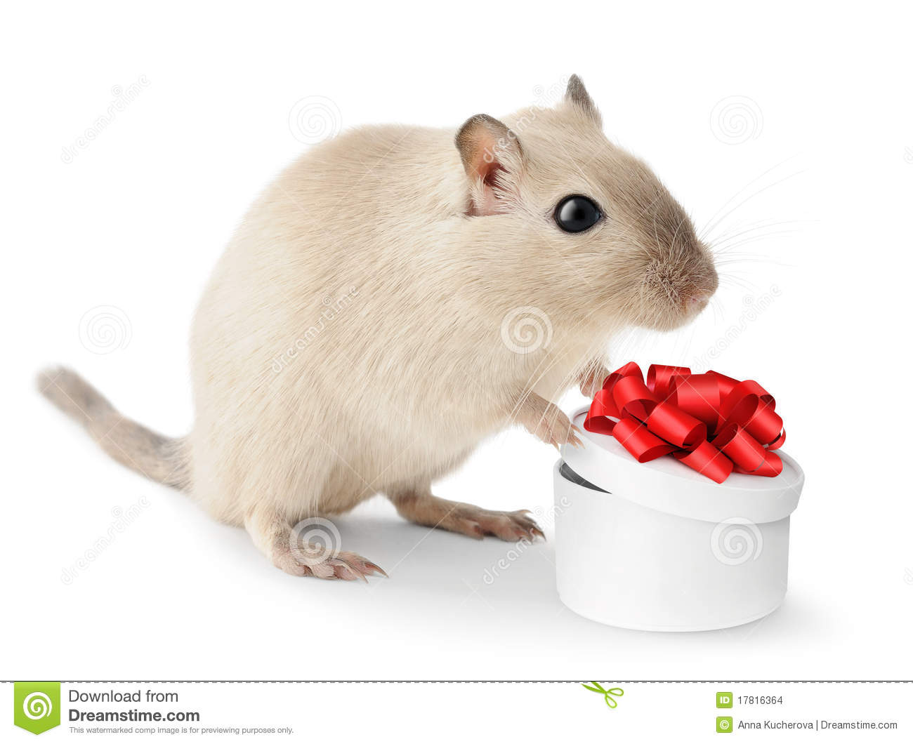 Cute Little Mouse Stock Photo. Image Of Present