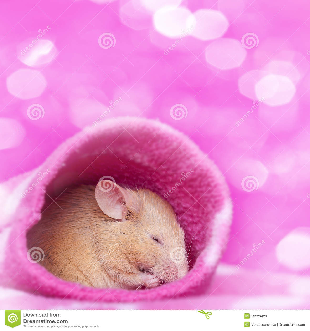 Cute Little Mouse Sleeping Stock Photo Image 33226420