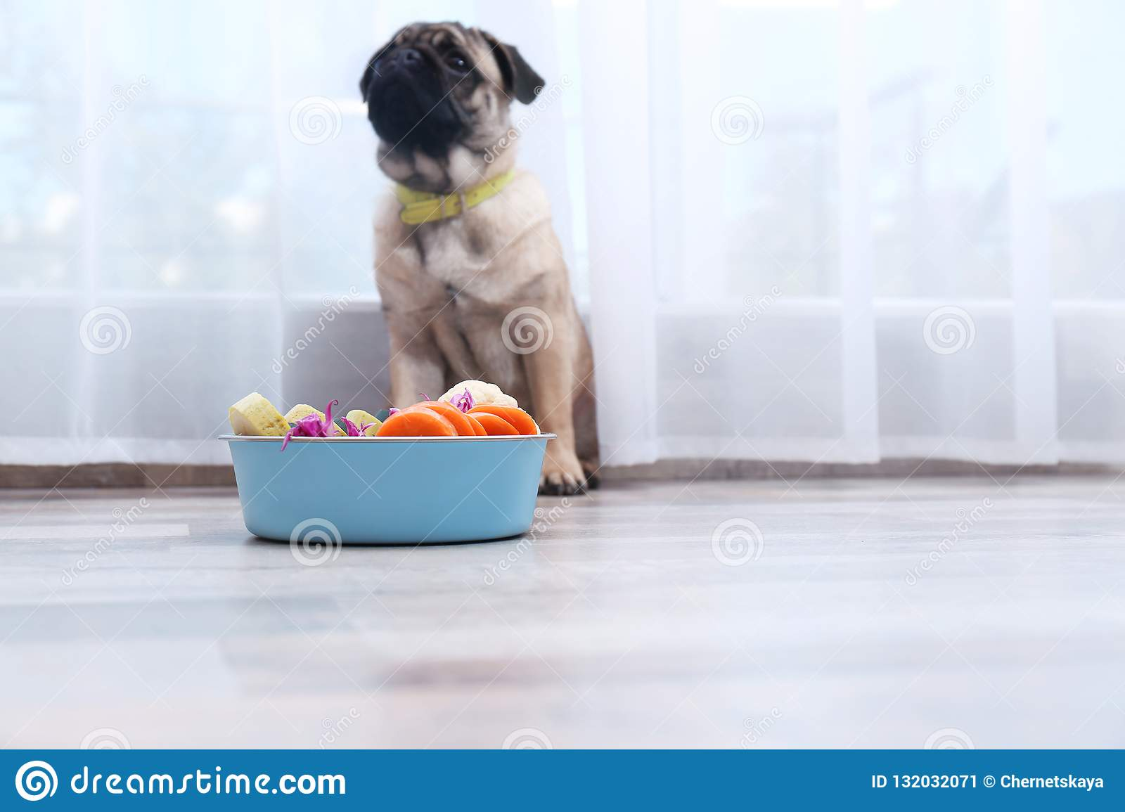 Cute Little Pug And Bowl With Organic Food At Home