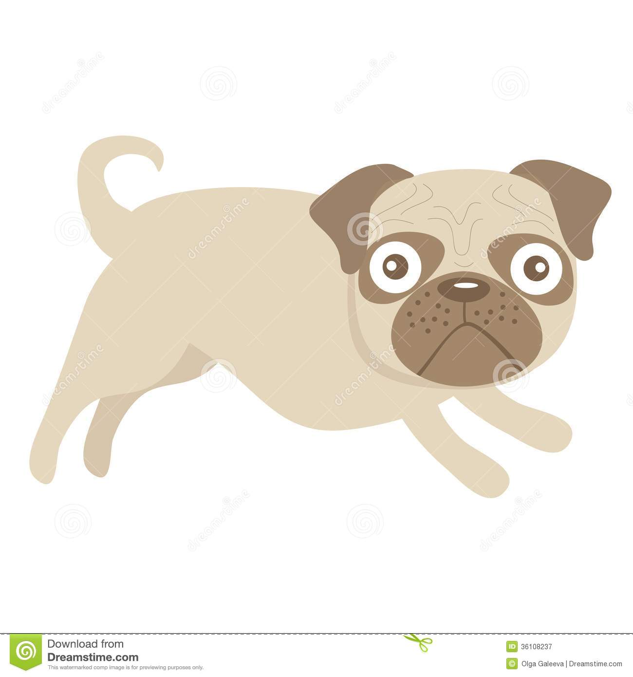 cute little pug dog royalty free stock photography   image