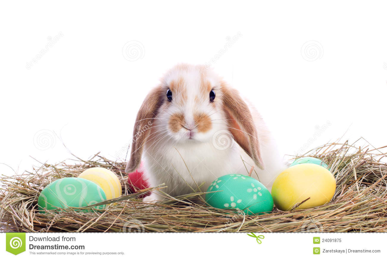 Cute Little Rabbit With Easter Eggs Stock Image - Image of ...