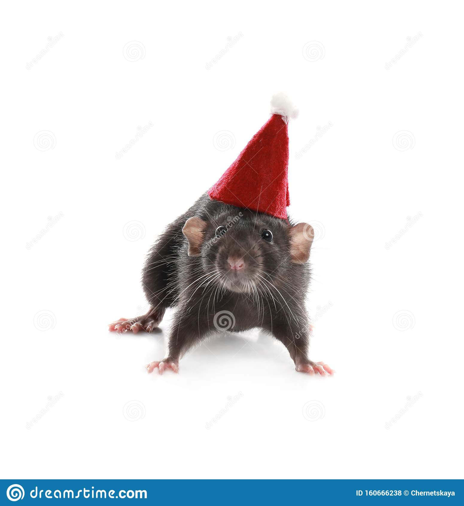 Cute little rat in Santa hat. Chinese New Year symbol