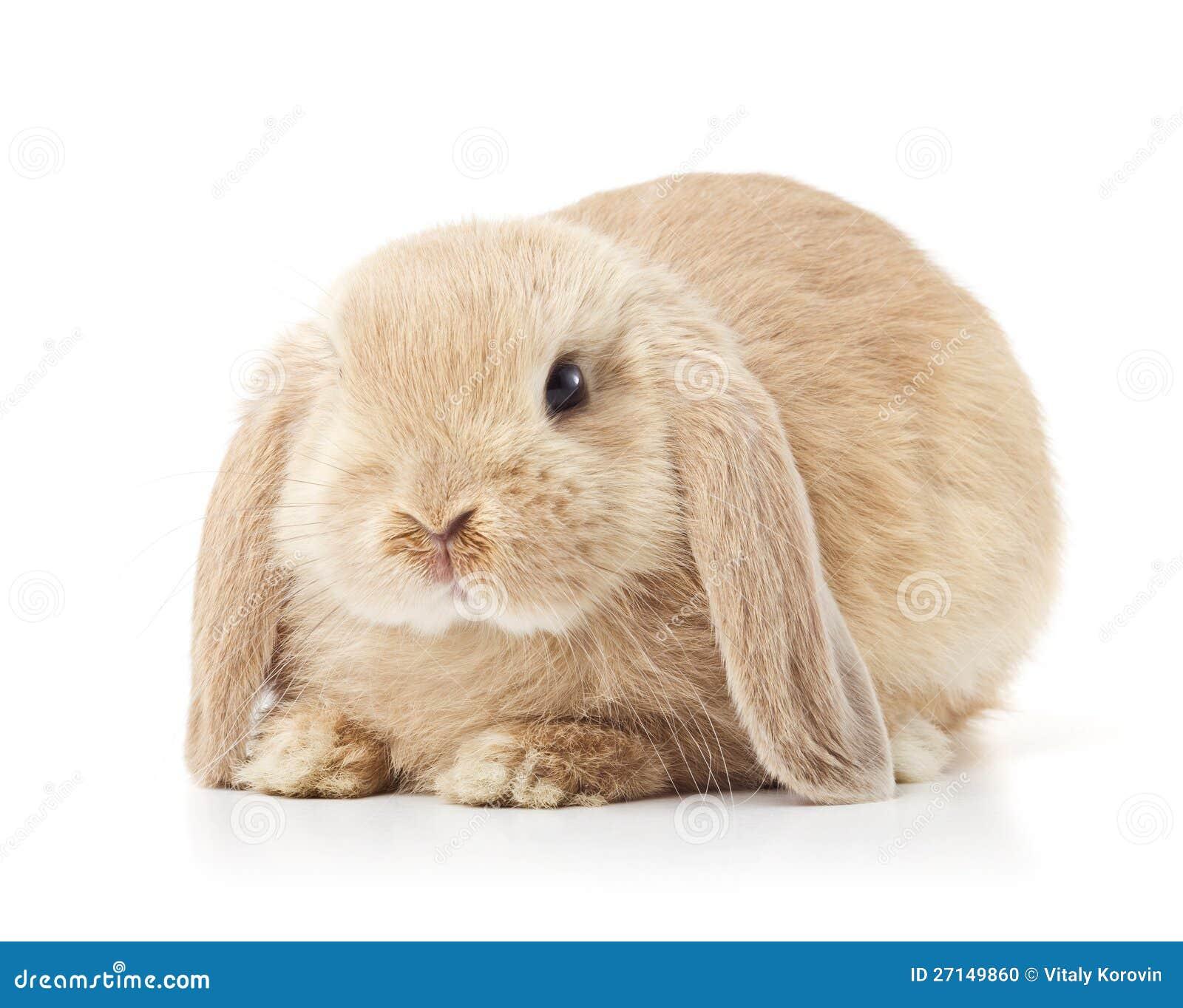 cute long eared rabbit stock photo   image 27149860