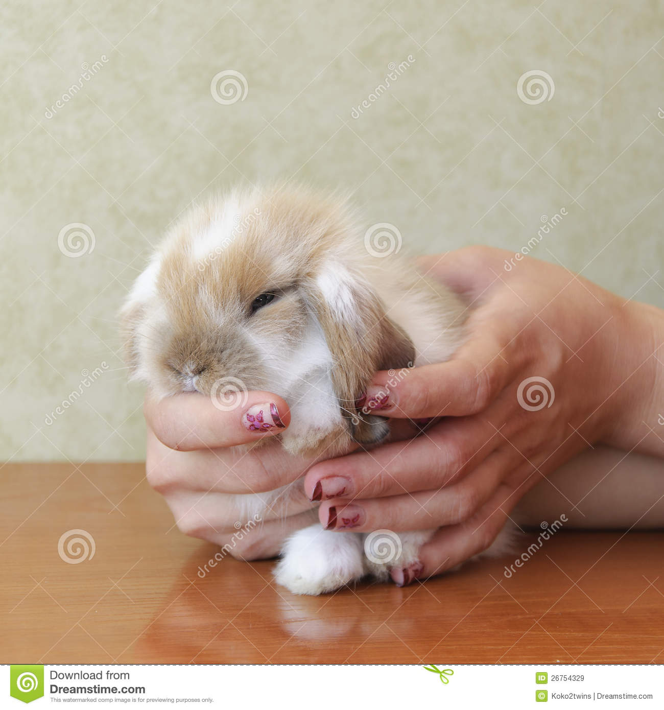 Baby lop eared rabbit - photo#28