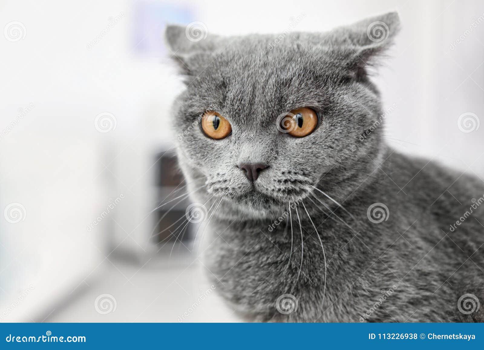 Cute lovely cat