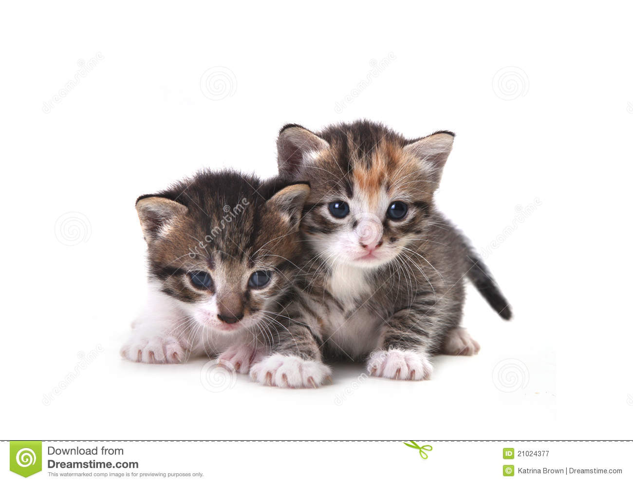 Cute Newborn Baby Kittens Easily White Stock Image Image