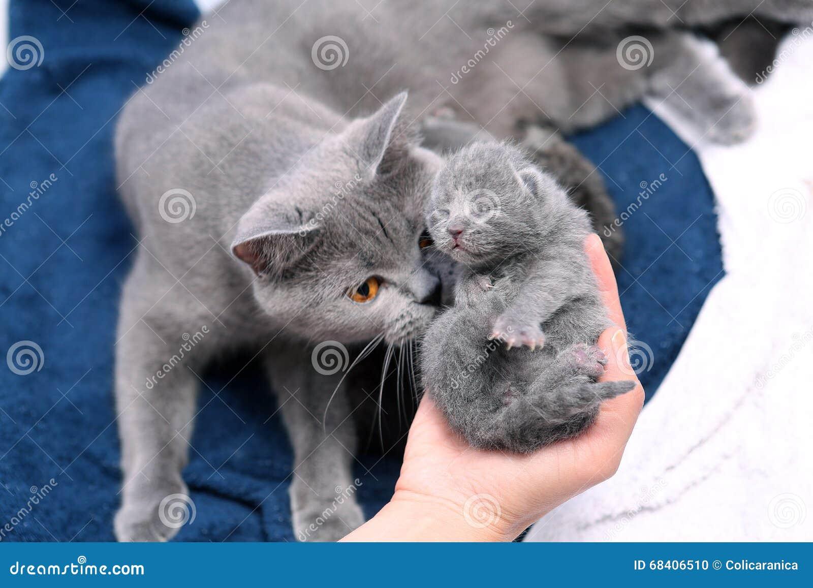 Cat lifespan female - Cryptokitties clone