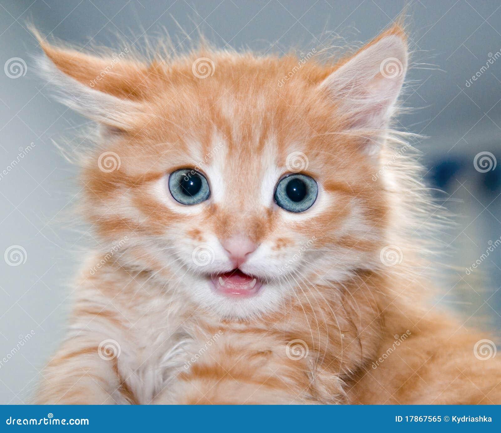 Cute Orange Kitten With Blue Eyes Royalty Free Stock Image