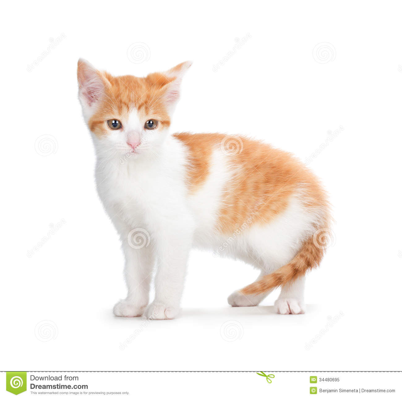Cute Orange Kitten Looking Up On A White Background. Royalty Free ...