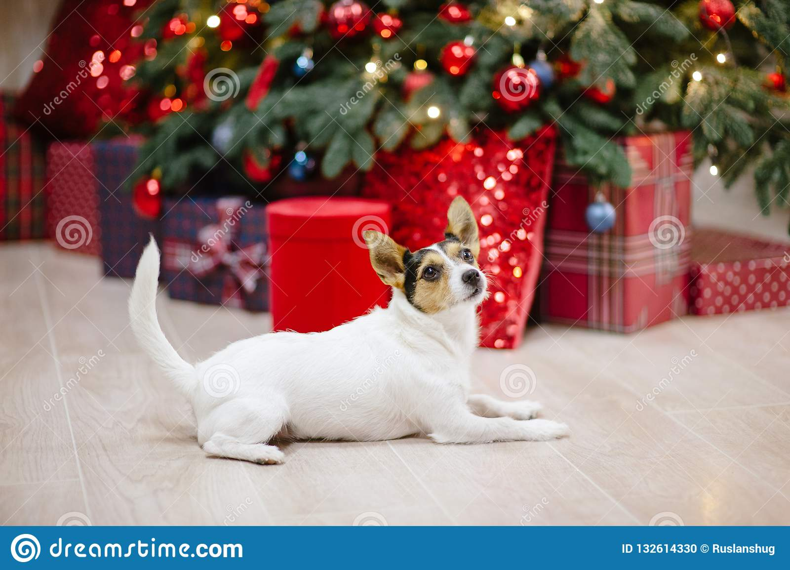 JACK RUSSELL TERRIER DOG CHRISTMAS ORNAMENT
