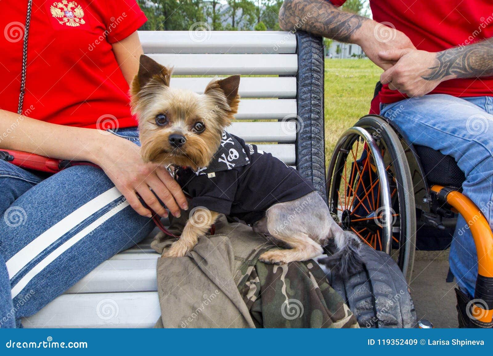 Peachy Cute Pet Dog Sits On Bench With Host In Wheelchair Frankydiablos Diy Chair Ideas Frankydiabloscom