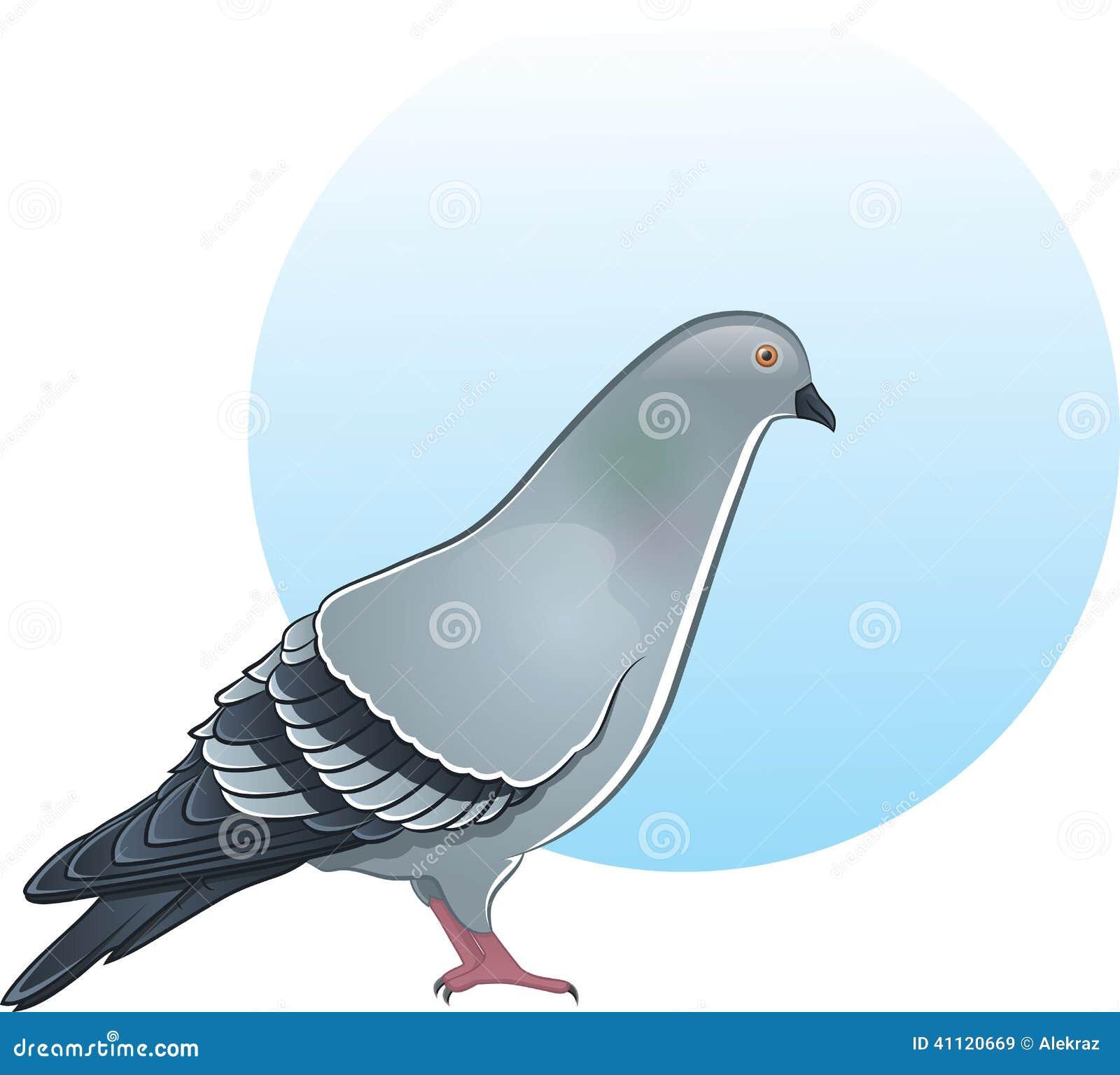 Cute Pigeon Illustration Stock Vector Image 41120669