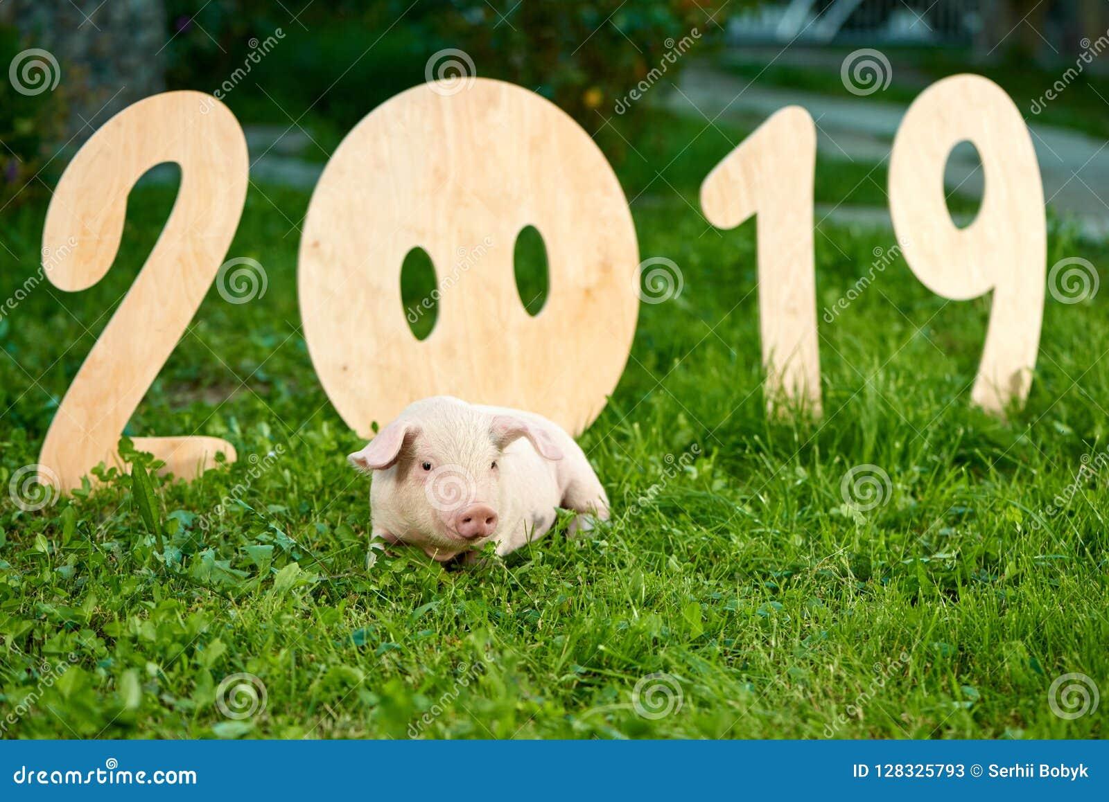 Cute piggy lying near decorative numerals of 2019.