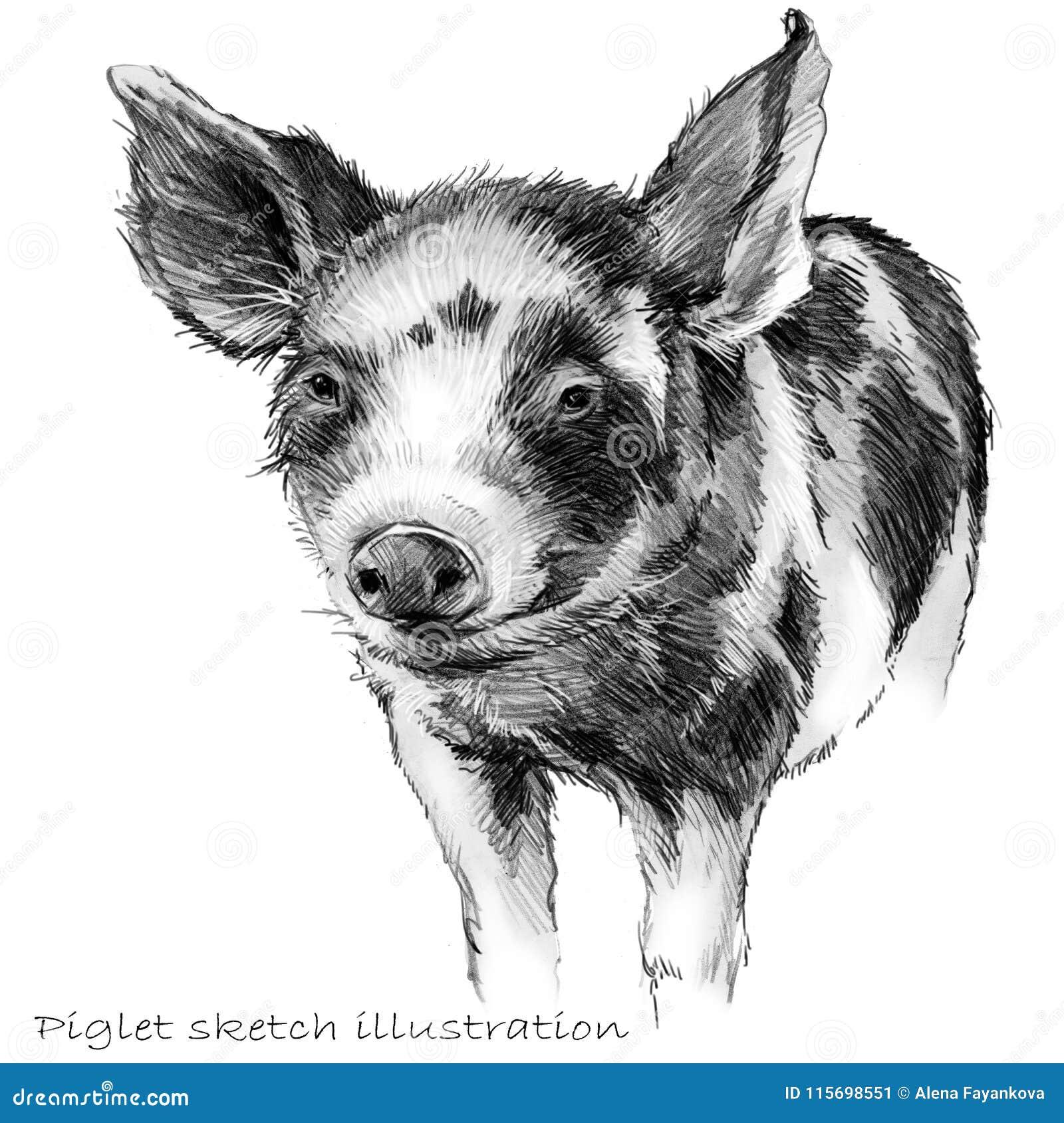 Cute piglet pig pencil sketch illustration stock illustration