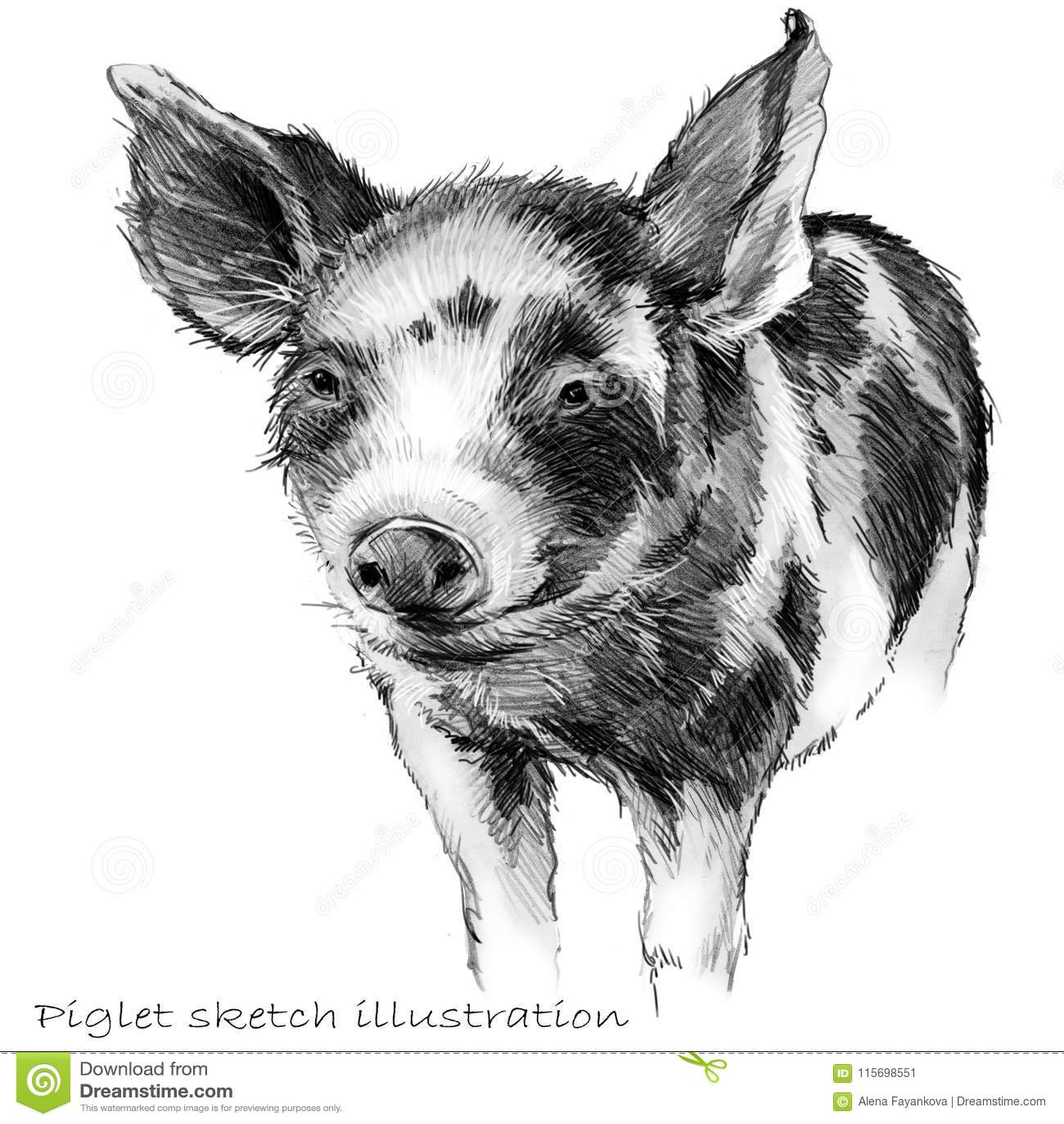 Cute piglet pig hand drawn pencil sketch illustration