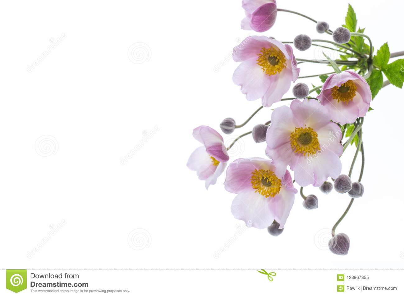 Cute Pink Flowers On A White Background Stock Image Image Of