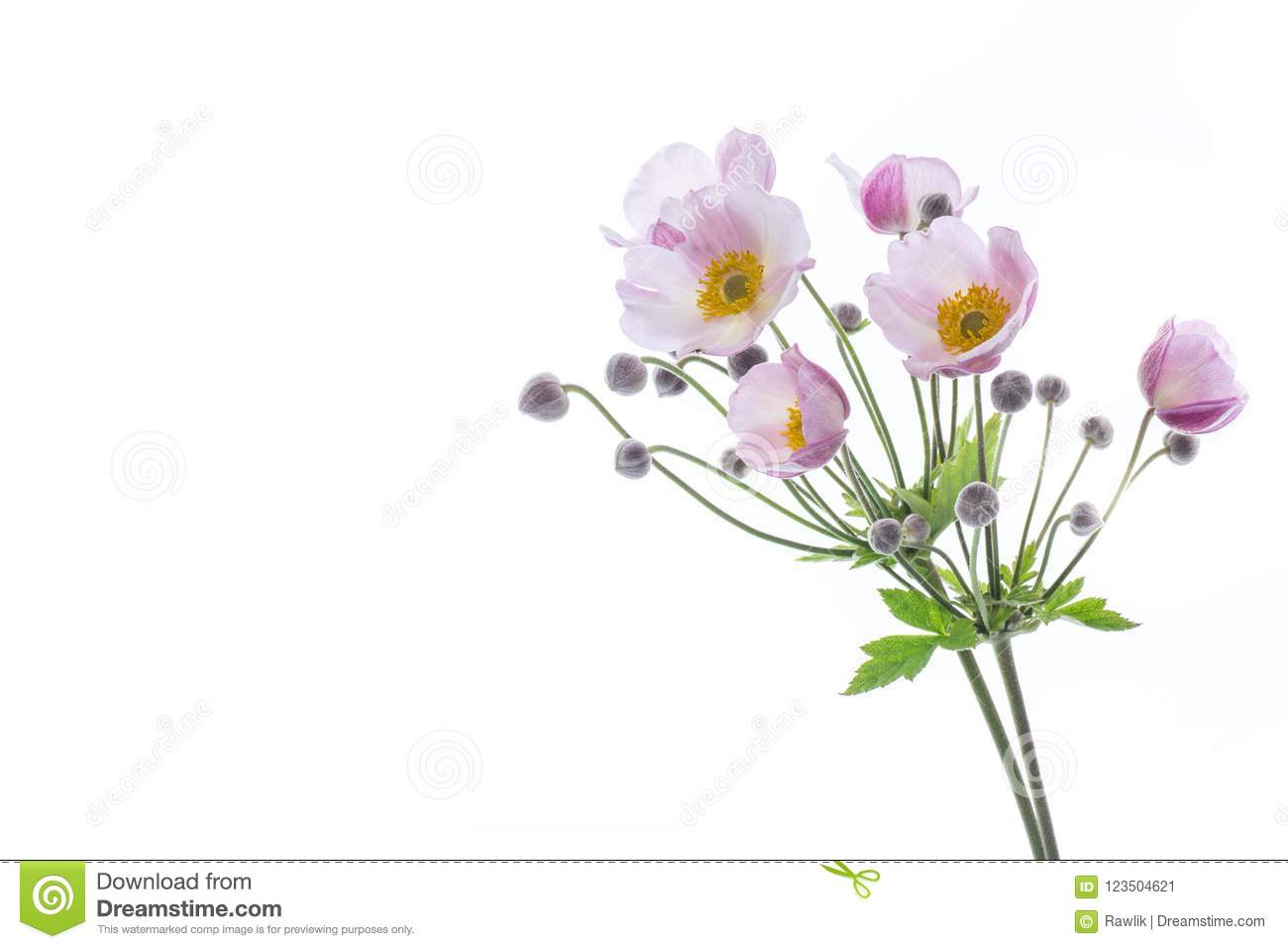 Cute Pink Flowers On A White Background Stock Image Image Of Bush
