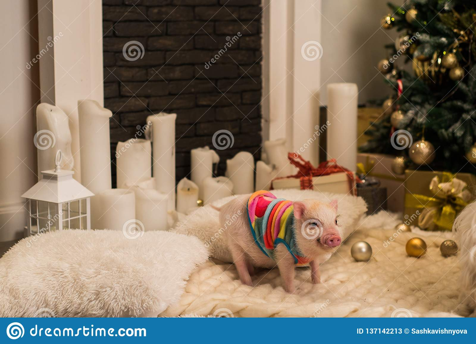 Cute pink mini pig indoors