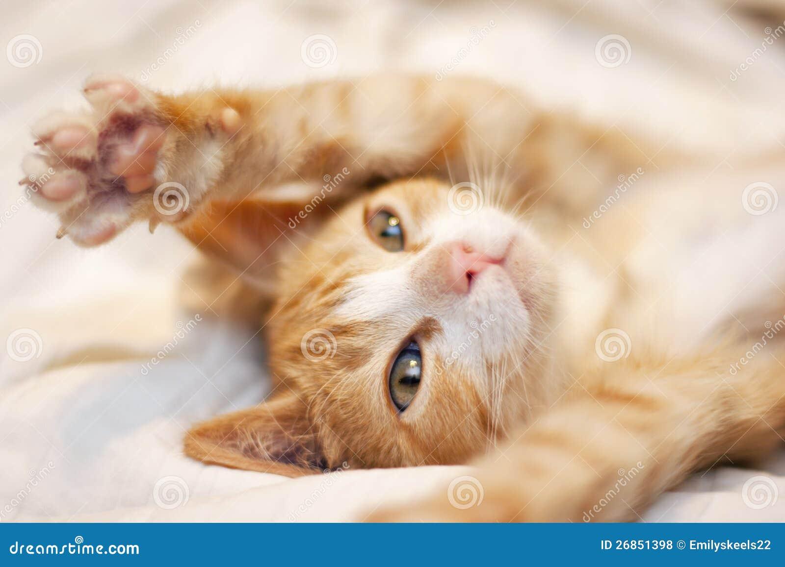 Cute Playful Orange Kitten Royalty Free Stock s Image