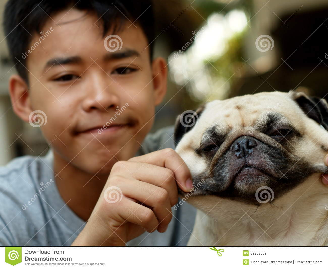 Cute Pug Dog Playing Outdoor Stock Photo - Image: 39267509