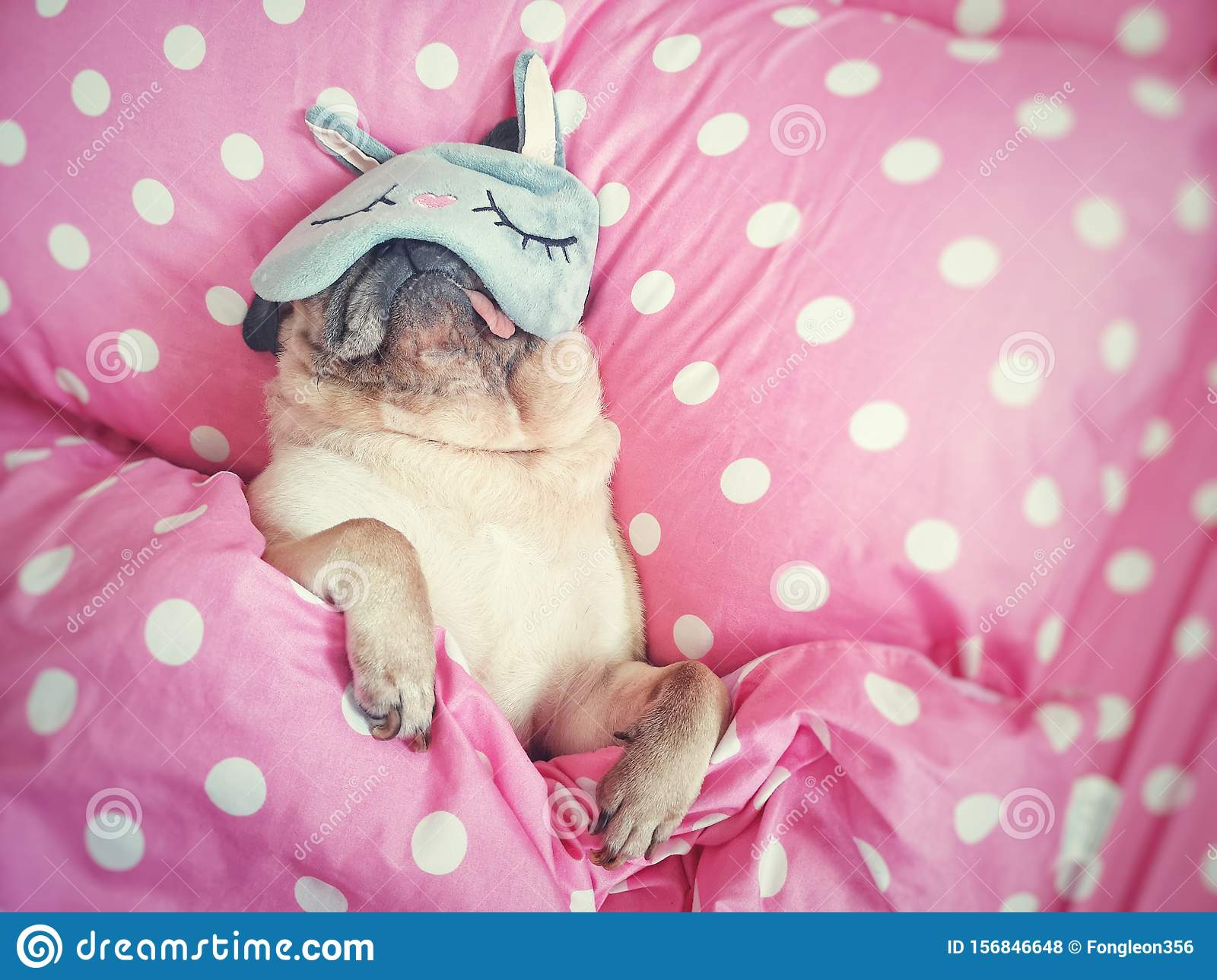 Cute Pug Dog Sleep Rest With Funny Mask In The Bed Wrap With Blanket And Tongue Sticking Out In The Lazy Time Stock Photo Image Of Pillow Home 156846648