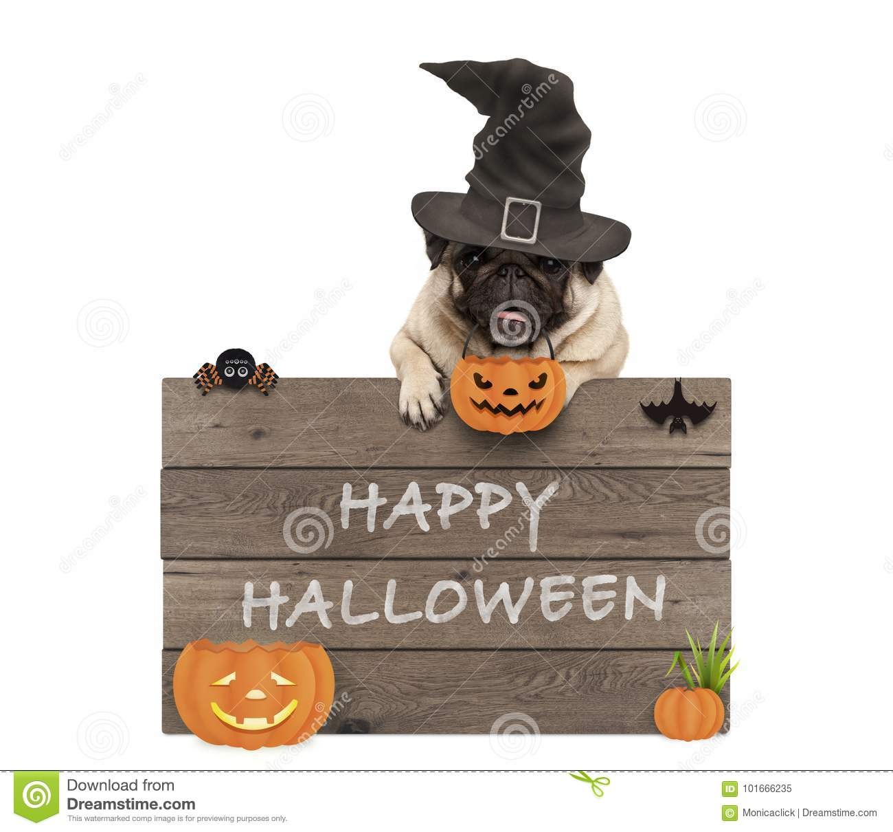 Cute pug dog wearing witch hat with wooden board and text happy halloween