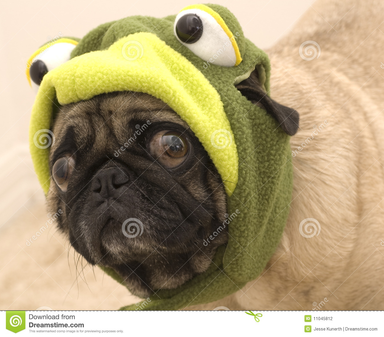 cute pug dressed as a frog stock photography image 11045812
