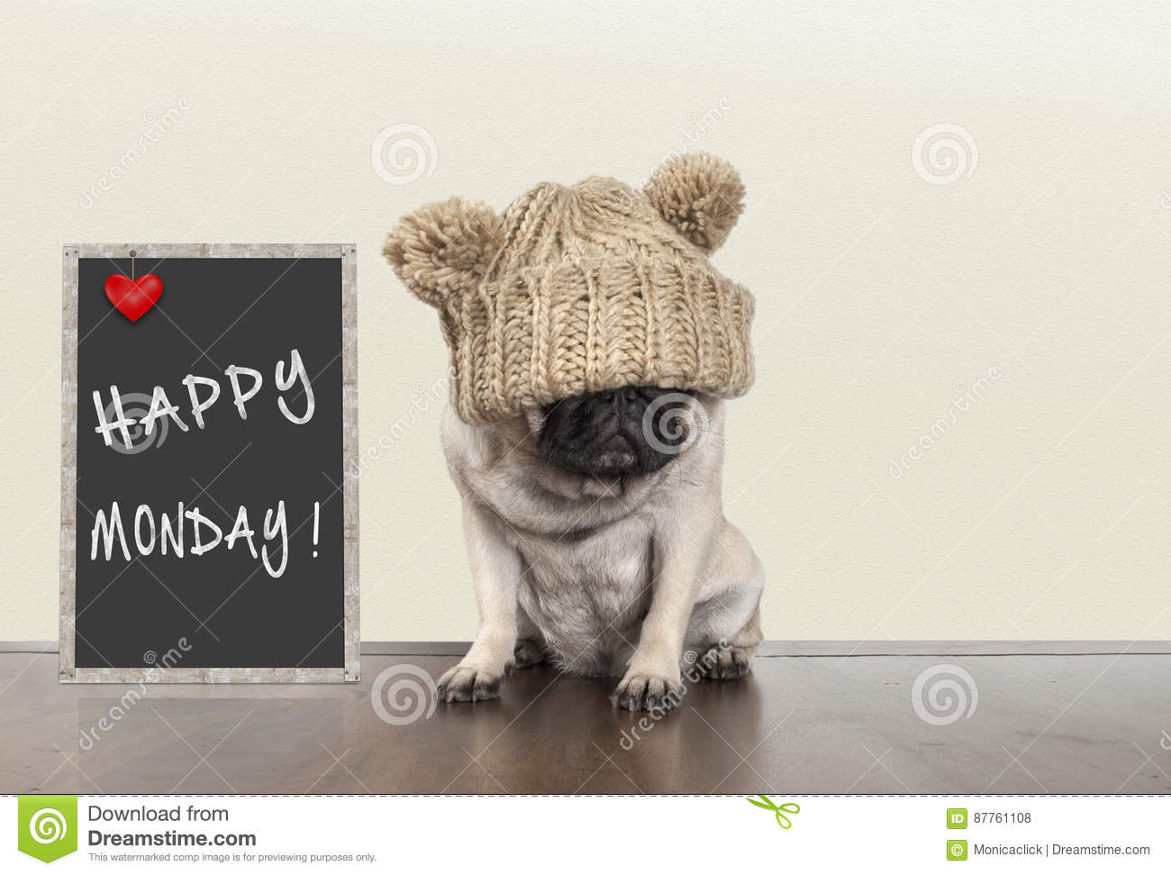 Cute pug puppy dog with bad monday morning mood, sitting next to blackboard sign with text happy monday, copy space