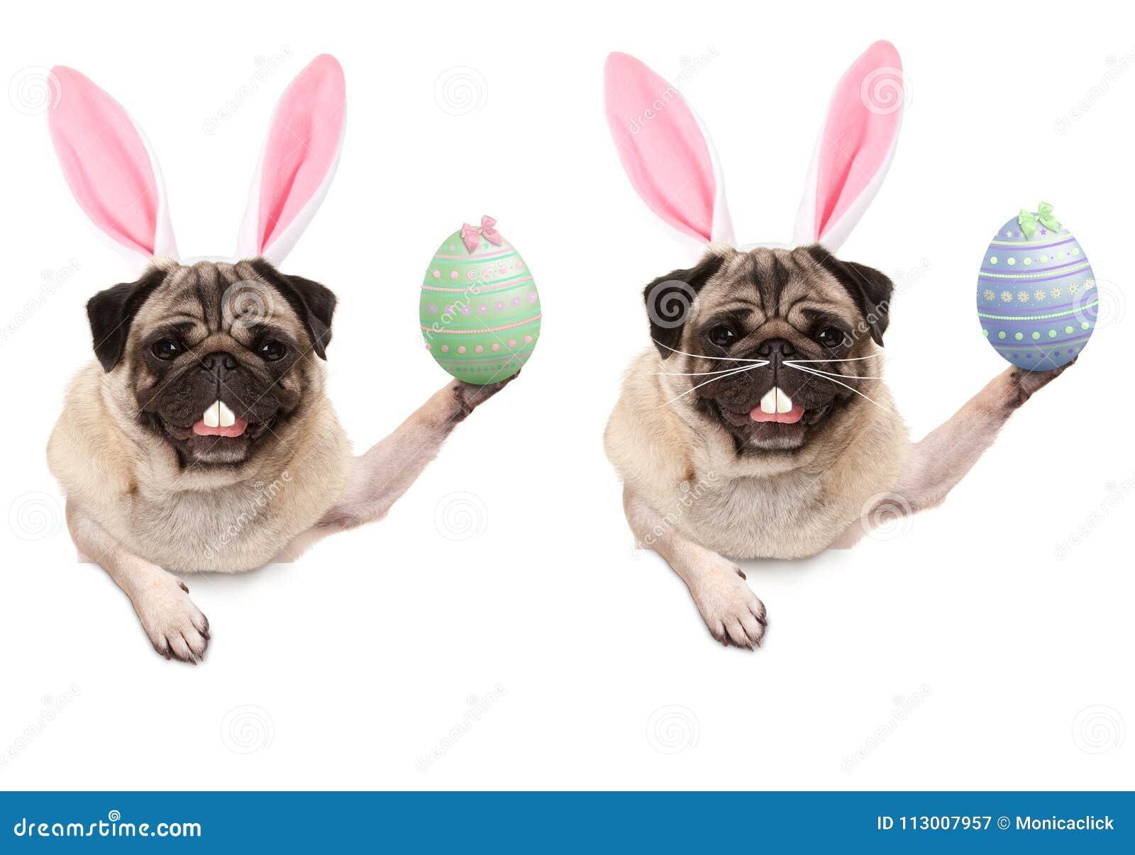 7d1ab078adda0 Cute Pug Puppy Dog With Bunny Ears Diadem