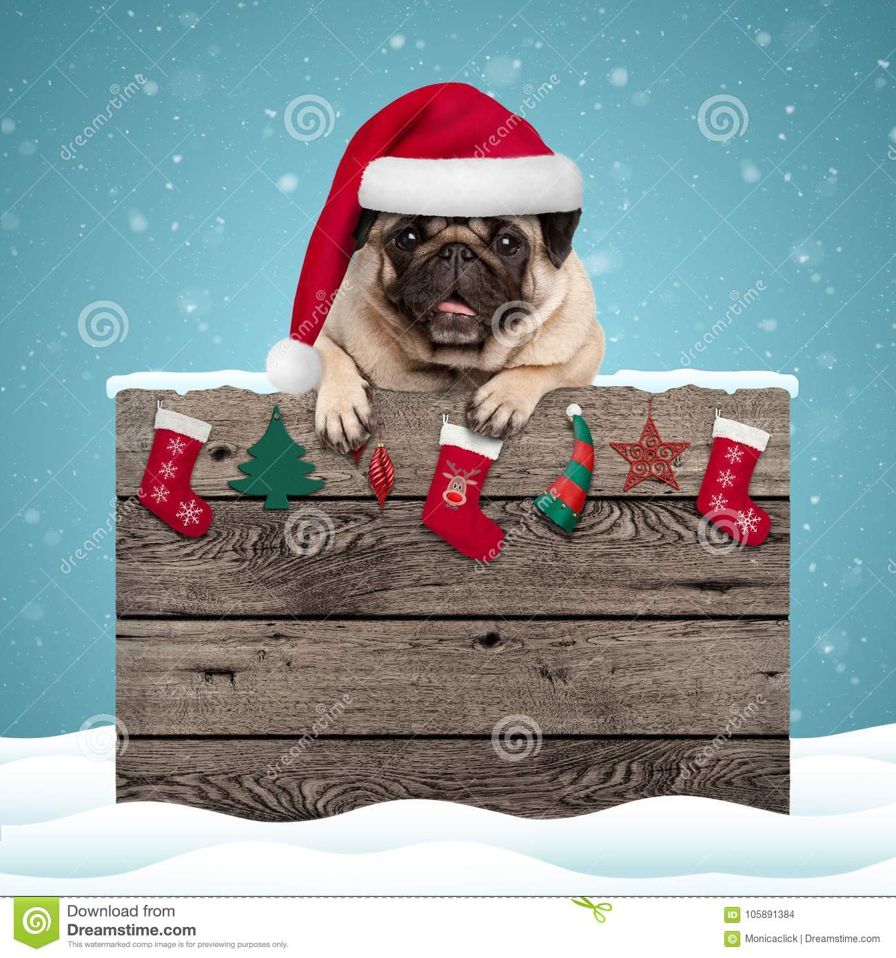 pug paws cute christmas stock images 209 793 photos 2055
