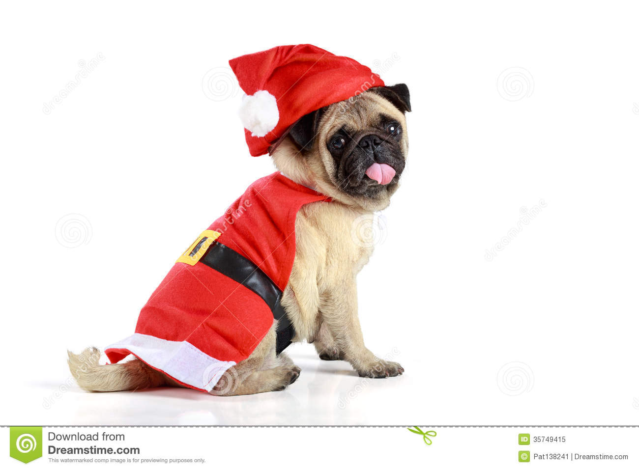 Cute Pug Puppy Wearing A Santa Claus Costume Royalty Free Stock Photo ...