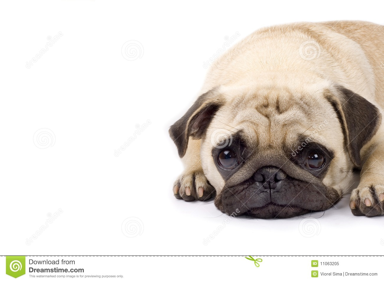 Cute Dog Sad Eyes