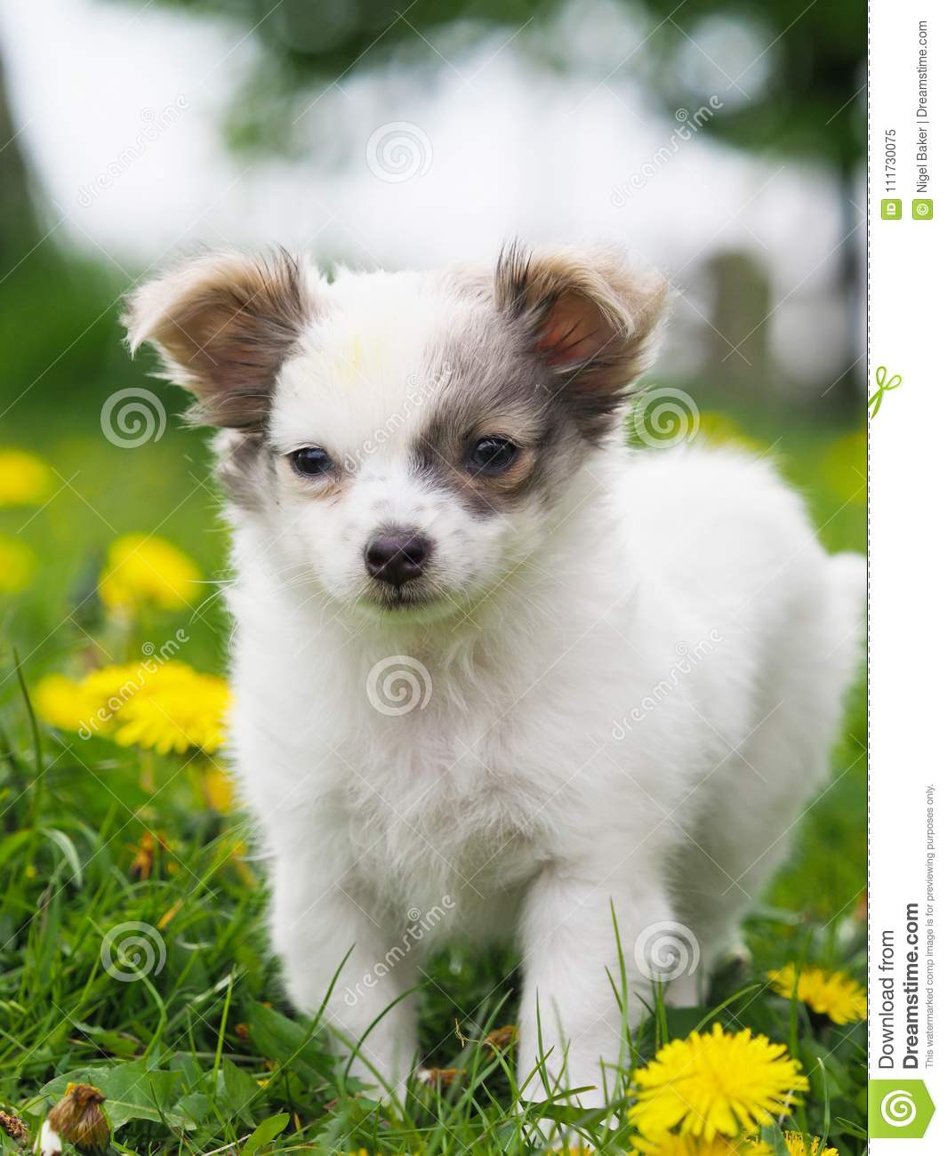 Cute Pup In Flowers Stock Image Image Of Pets Baby 111730075
