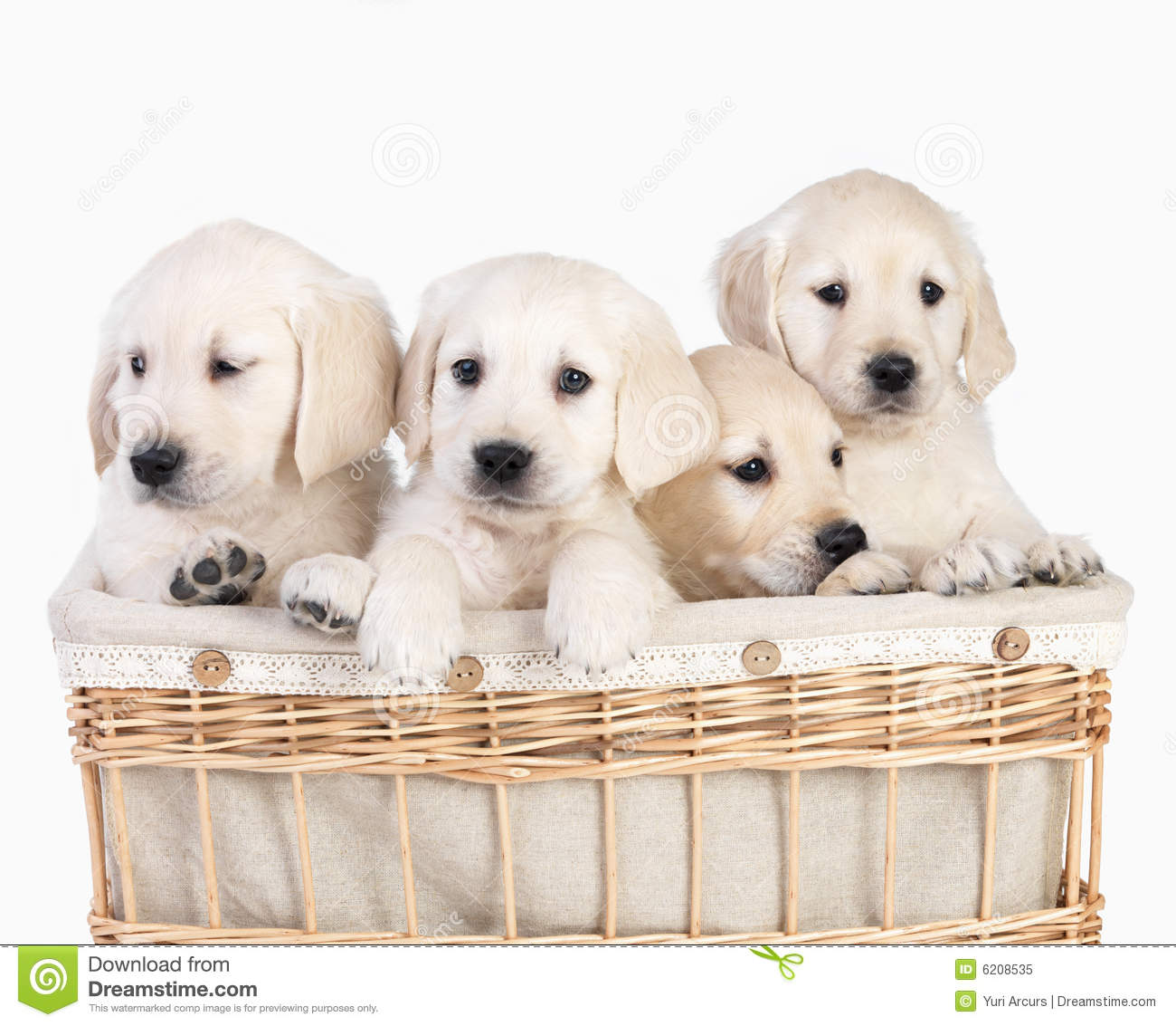 Cute Puppies In Basket. Isolated Stock Image