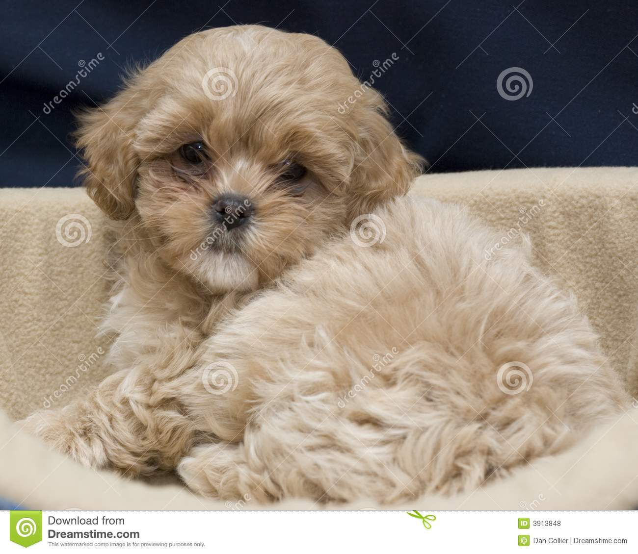 Cute Puppy Royalty Free Stock Photos Image 3913848