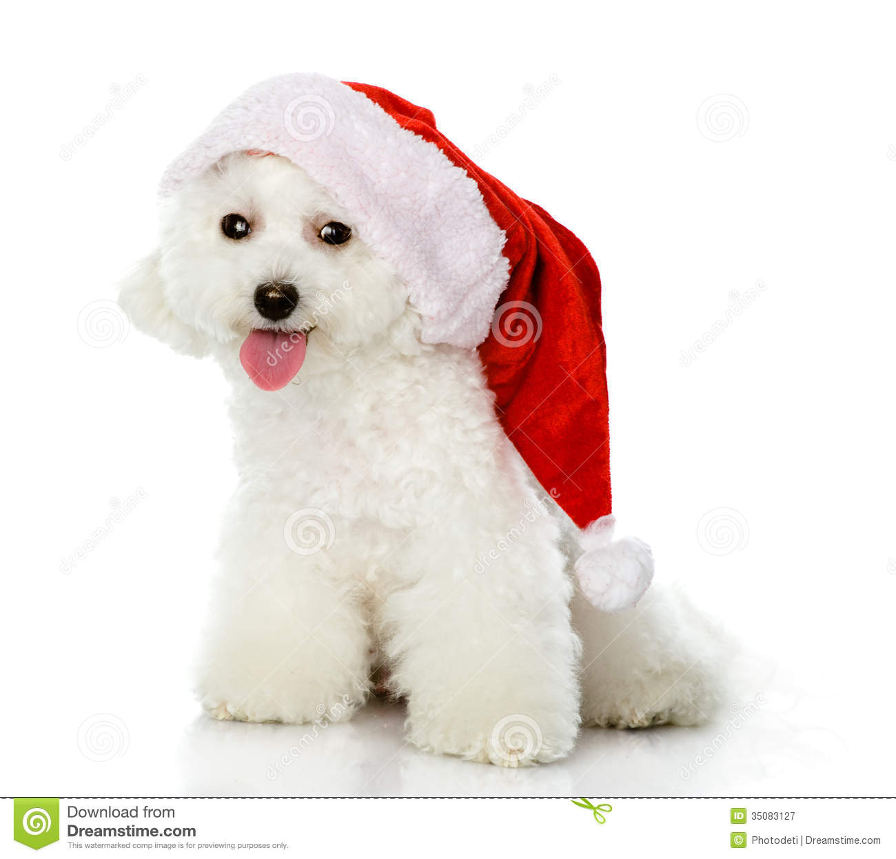 cute dog in christmas hat stock photo. image of looking - 42283762