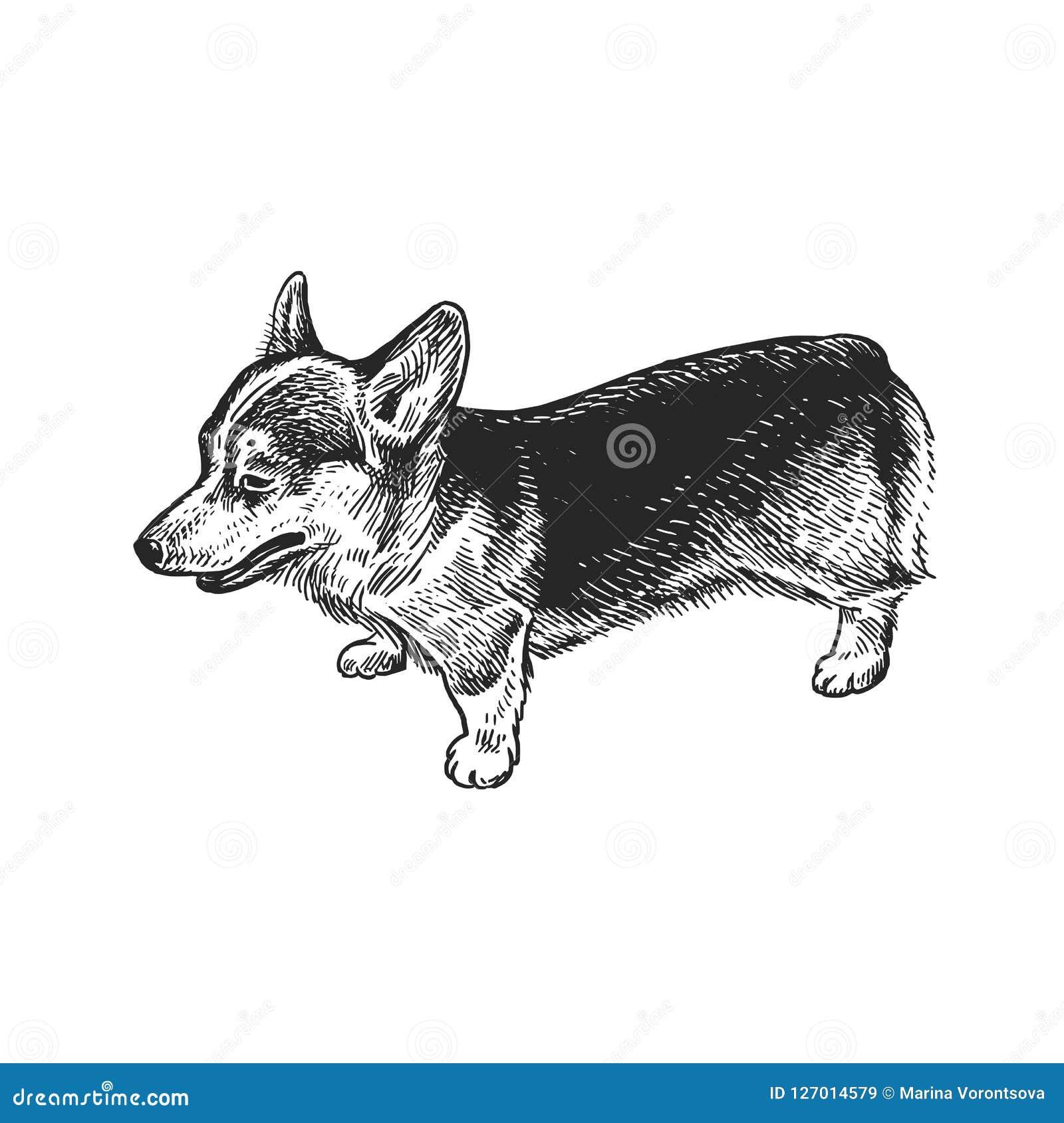 Dog Breed Corgi  Cute Puppy  Black And White Hand Drawing