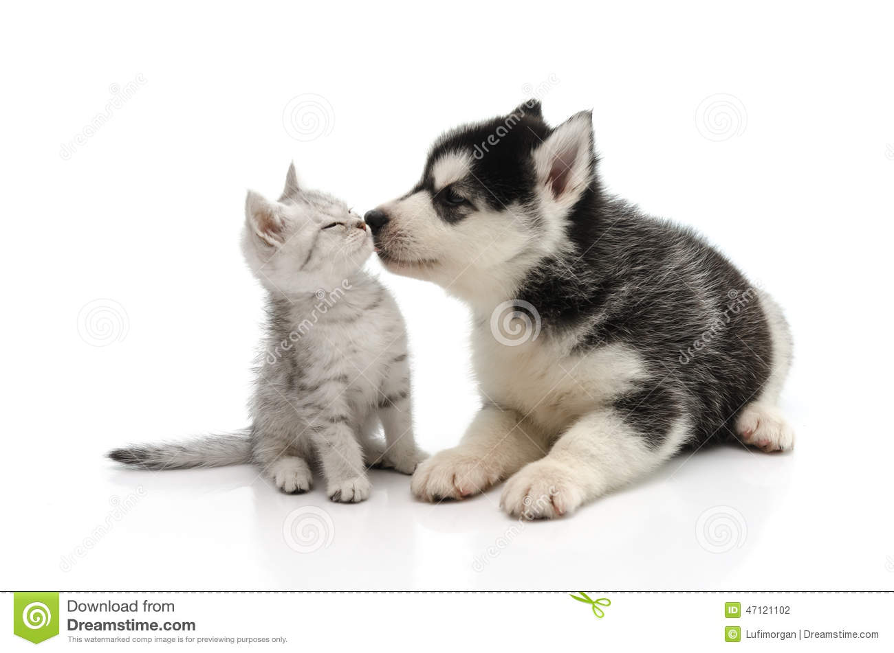 Cute puppies and kittens kissing