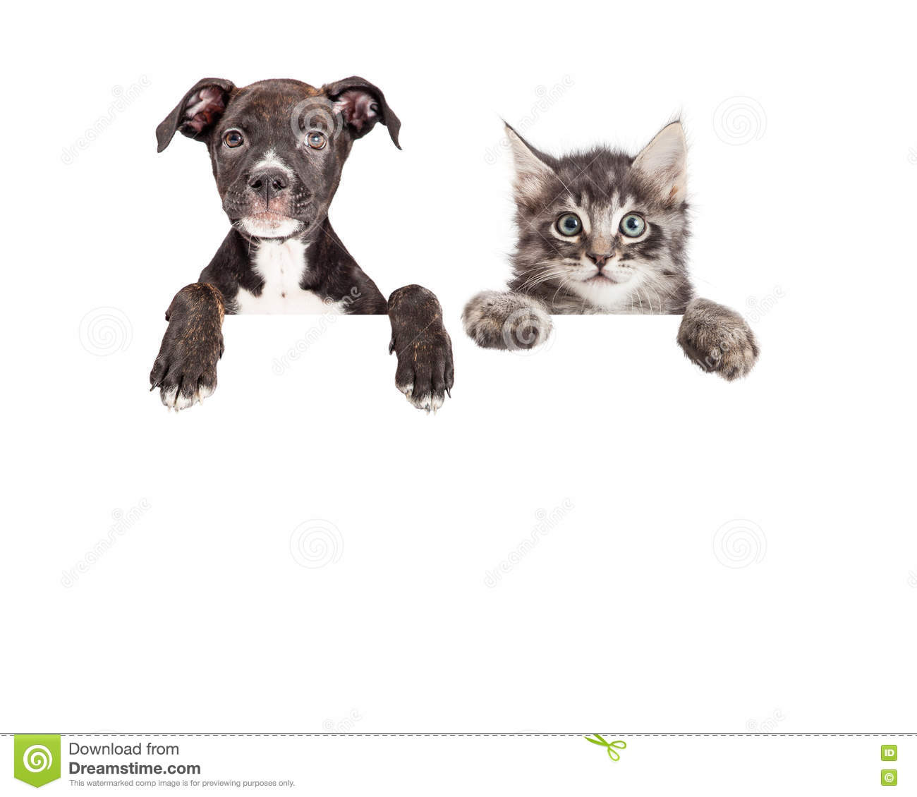 cute puppy and kitten hanging over white banner stock image image