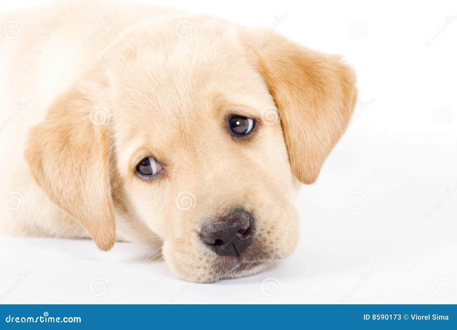 Adorable Dog Collar