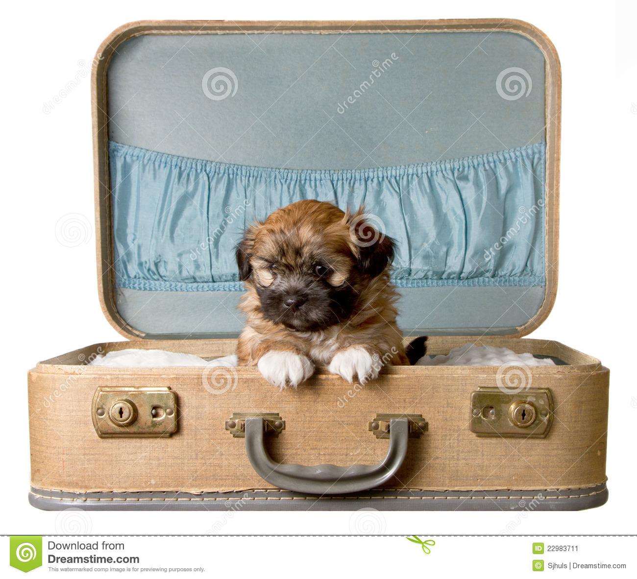 Cute puppy in a vintage suitcase stock image image 22983711 for What to do with vintage suitcases