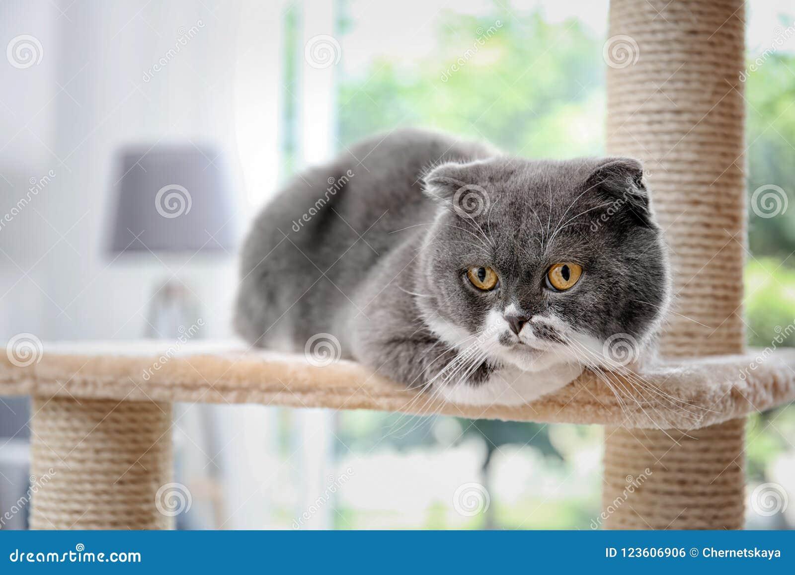Cute pussycat on cat tree