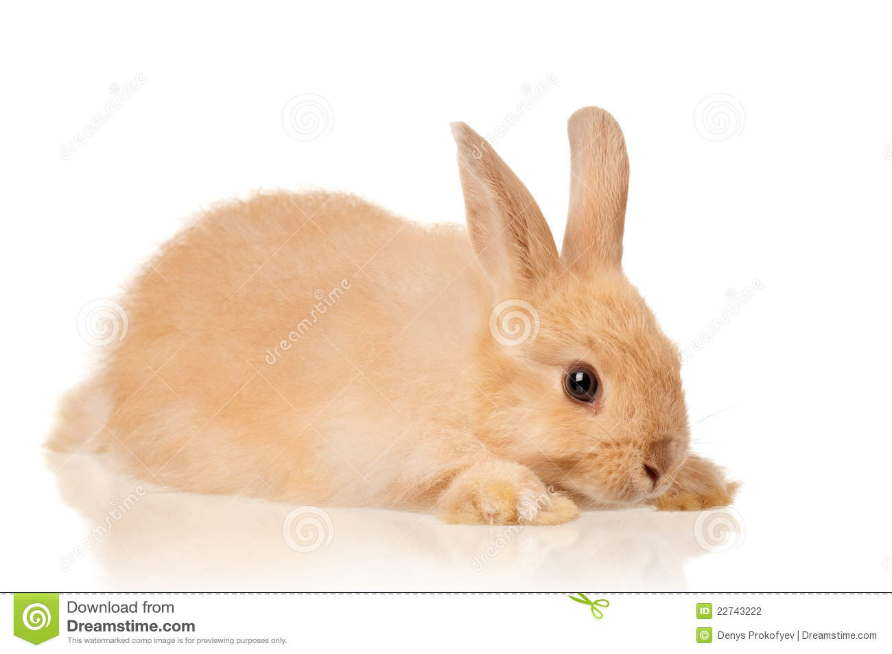 cute rabbit stock photo image of concept mammal easter