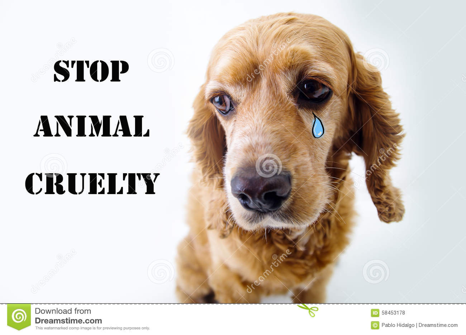 how to avoid animal cruelty