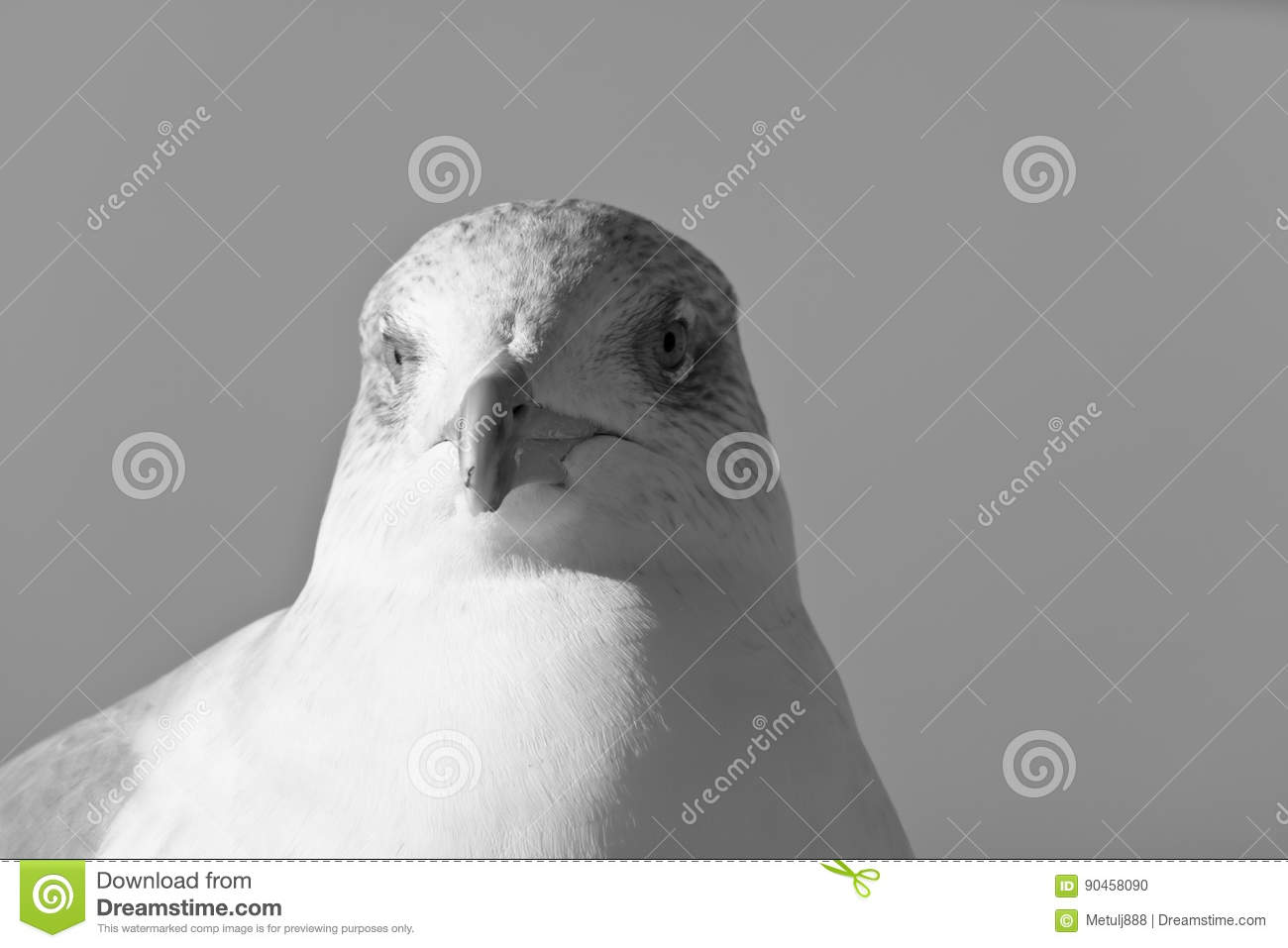 Cute seagull head in black and white