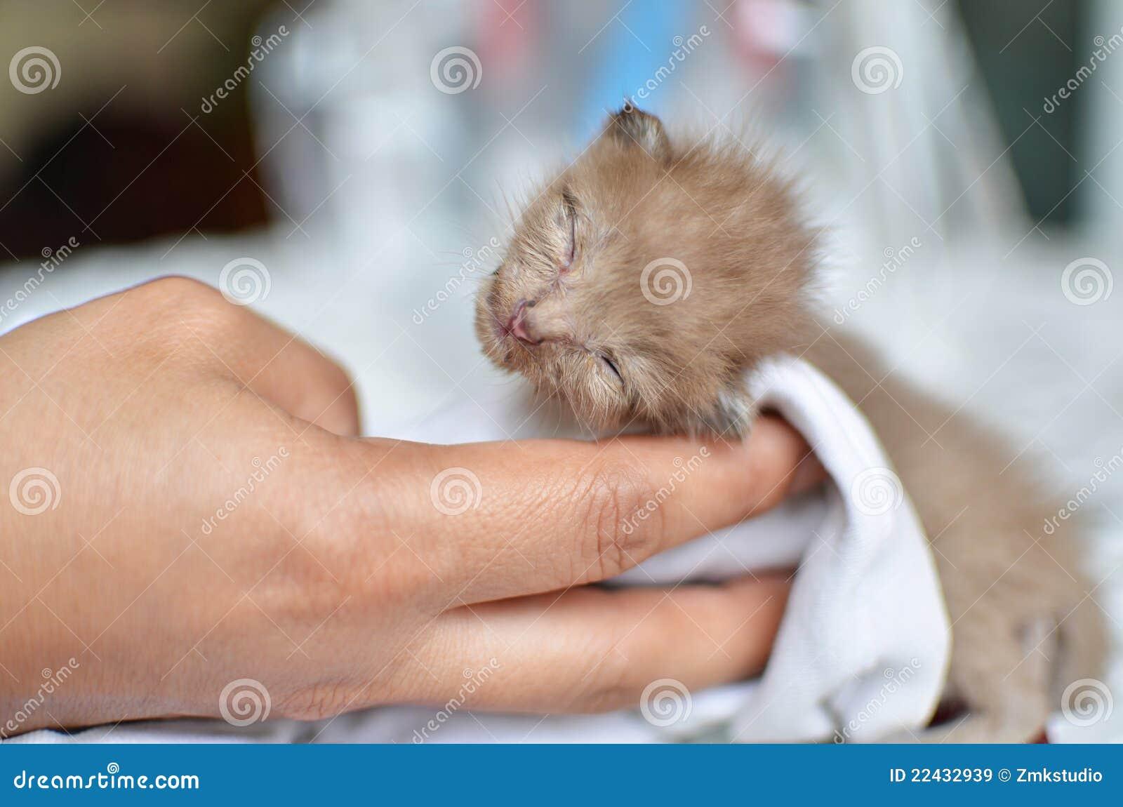 Pin Cute Baby Kittens Sleeping on Pinterest
