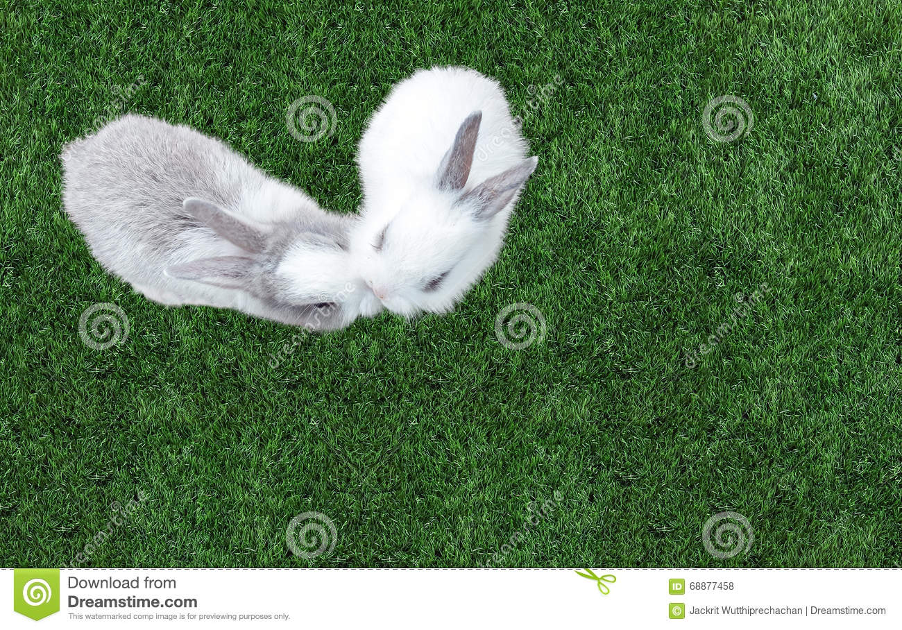 Cute Small Baby Easter Bunny (White and Gray Rabbit) Kissing in Heart like Shape on Grass in The Park at The Corner